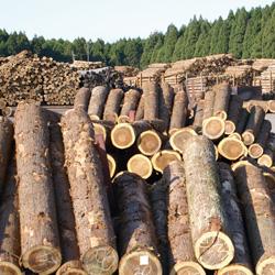 鹿児島県の木材利用の取り組み