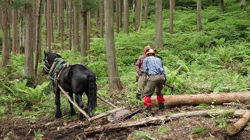 馬搬を通じて森の健全化と林業再...